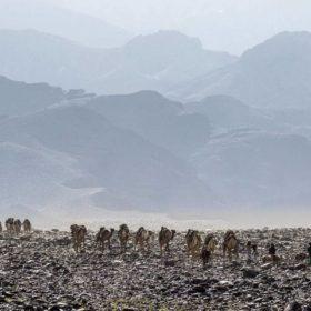 Danakilwüste